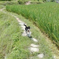 Yanjiao Dongzhai User Photo