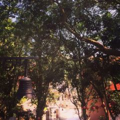 Xuefeng Temple User Photo