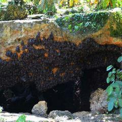Bat Caves User Photo