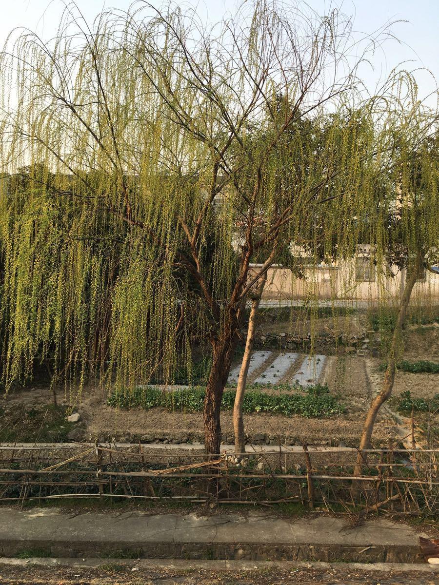 Diaoyu Villa Water Amusement Park