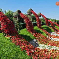 Miracle Garden User Photo