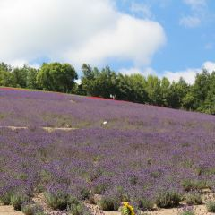 Horomitoge Lavender Garden User Photo