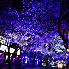 Jeonnong-ro User Photo