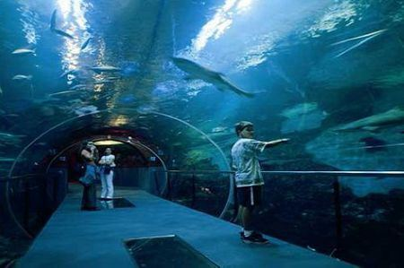 Museum of the Sea
