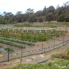 Kate's Berry Farm用戶圖片
