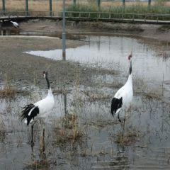 당나이 습지 거주지 생태촌 여행 사진