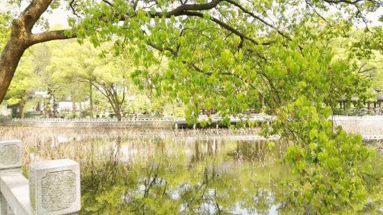 馬鞍山森林公園