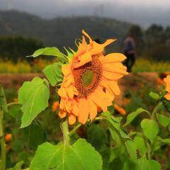 Pengcheng Thousand-flower Valley User Photo