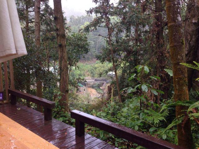 라벤더 삼림