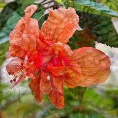 Nassau Botanical Gardens User Photo