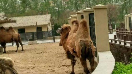 黃山野生動物園