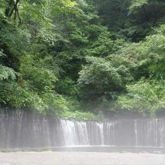 시라이토 폭포 여행 사진