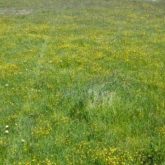玉樹草原用戶圖片