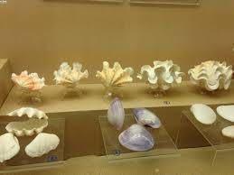 普吉貝殼博物館