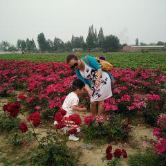 Qujiang Lavender Garden User Photo
