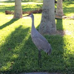 Crandon Park User Photo