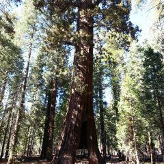 Mariposa Grove User Photo