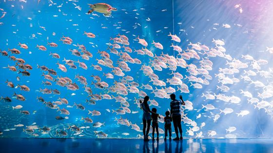 Up to 15% Off | Zhuhai Chimelong Ocean Kingdom Ticket