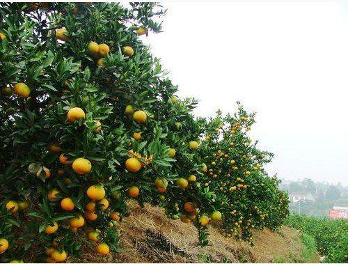 Shimen Xiuping Gardening Farm