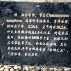 장탄 대장목 여행 사진