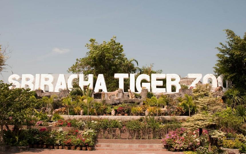 ตั๋วเข้าชมสวนเสือศรีราชา พัทยา (Sriracha Tiger Zoo Entry Ticket in Pattaya)