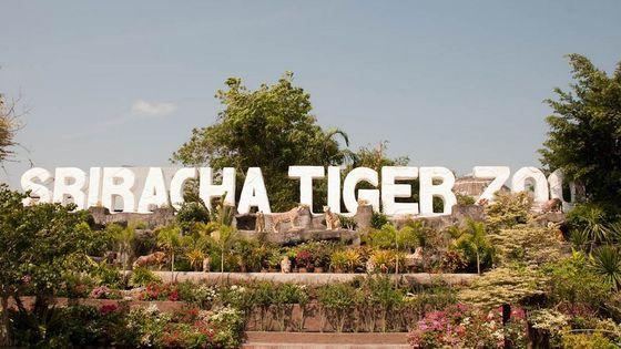 Pattaya Sriracha Tiger Zoo Ticket