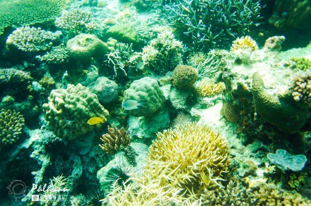 Malwawey Coral Garden