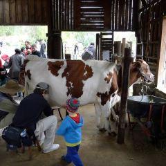 科林伍德兒童農場用戶圖片