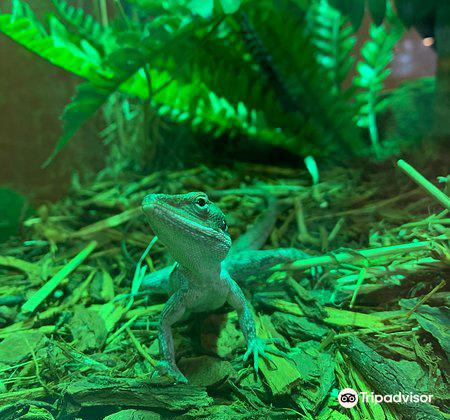 Canberra Reptile Zoo