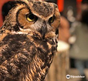 Owl Shrine