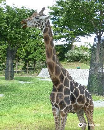 Omoriyama Zoo