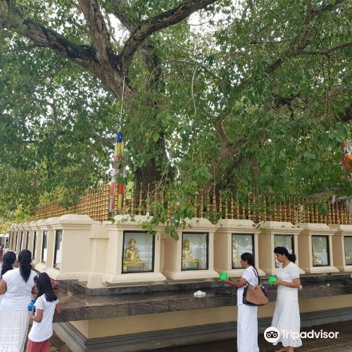 Kalutara 寺廟