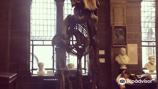 The Anatomical Museum