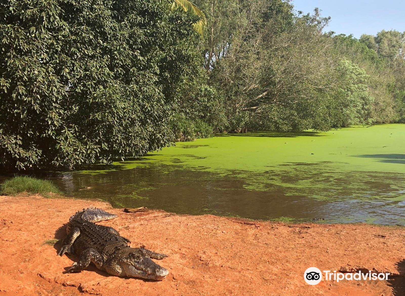 Malcolm Douglas Crocodile Park and Animal Refuge