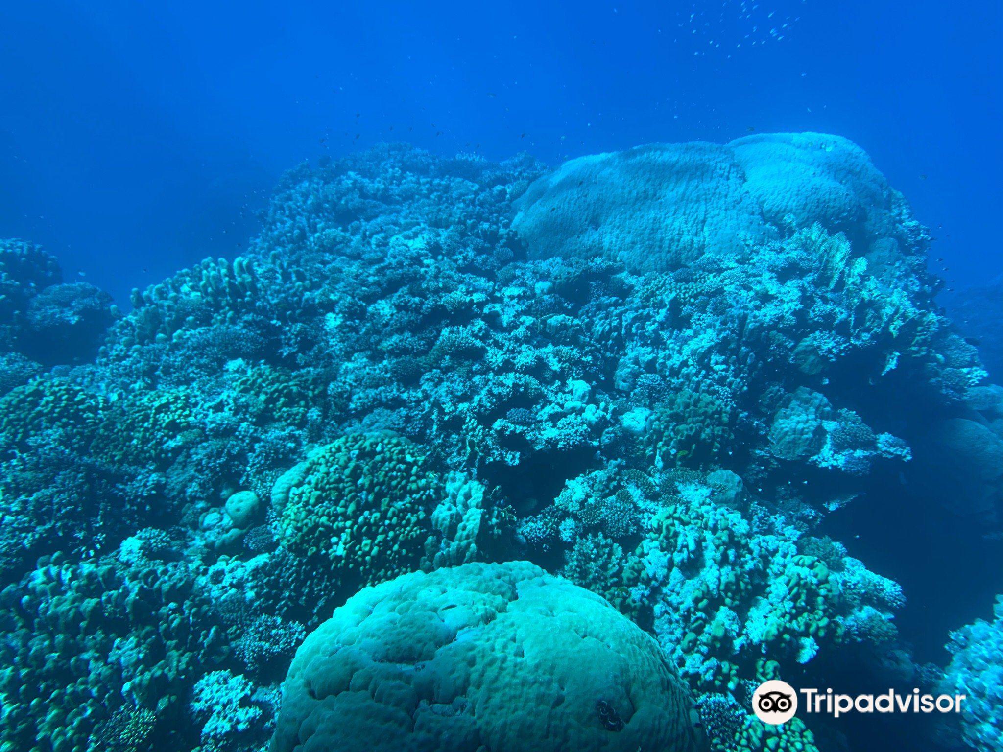 Seascope Submarine