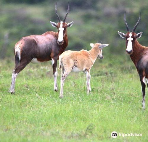Mpongo私人禁獵區