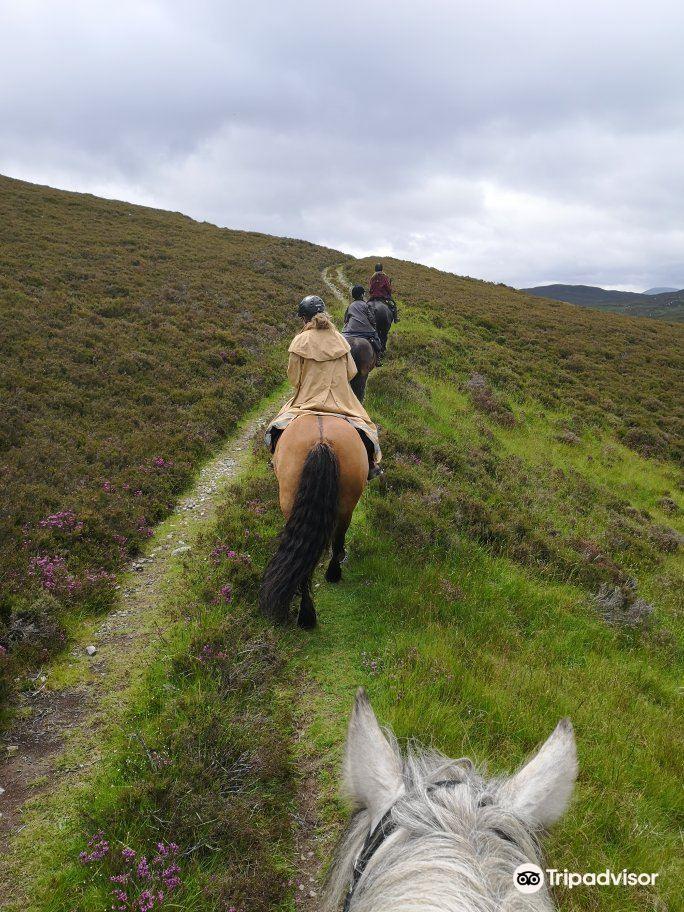 Highland Horse Fun Kingussie