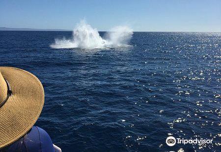 太平洋鯨魚基金會