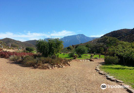 Karoo Desert Garden
