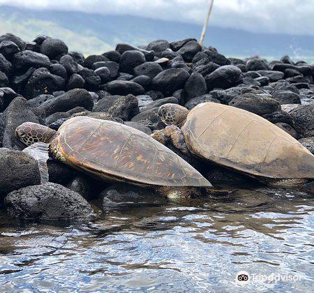 Hawaiian Islands Humpback Whale Sanctuary Visitor Center