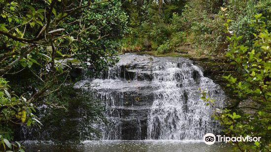 Gills Scenic Reserve