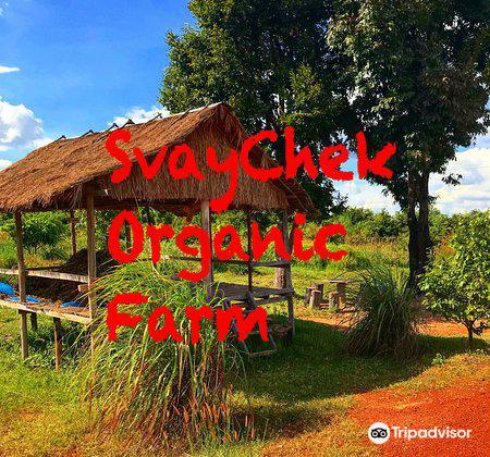 SvayChek Organic Farm