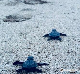 巴厘島海龜協會