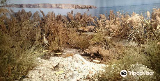 The Danube Delta Museum