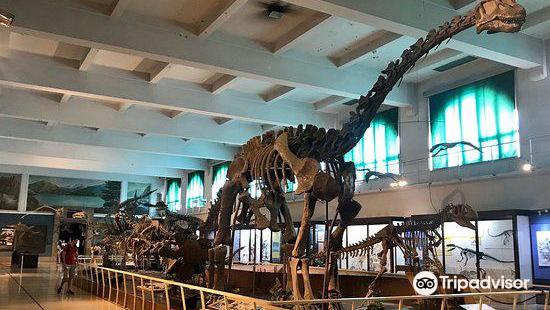 "Museo Argentino de Ciencias Naturales ""Bernardino Rivadavia"""